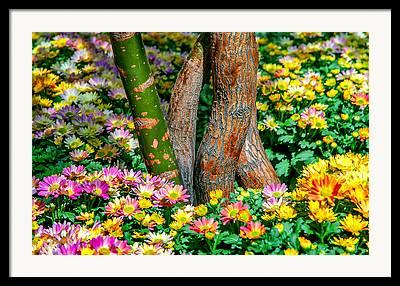 Colourful Bark Framed Prints
