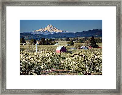 Surrounded By Beauty Framed Print by Mike Dawson