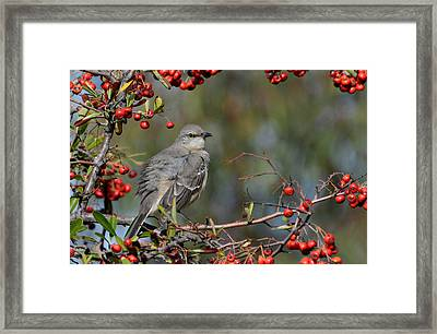 Surrounded By Berries Framed Print