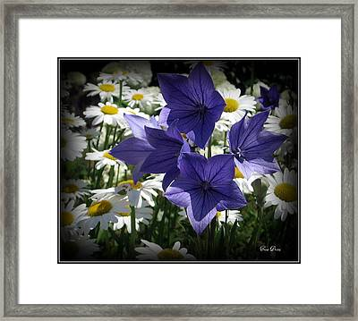 Surrounded By Daisies Framed Print by Trina Prenzi