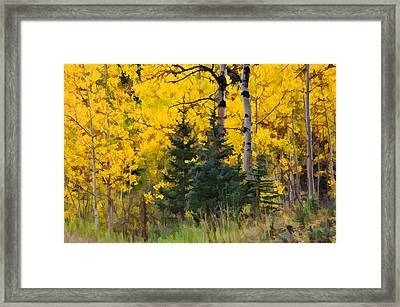 Surrounded By Gold Framed Print by Diane Alexander