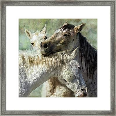 Surrounded By Love Framed Print