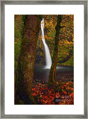 Surrounded By The Season Framed Print by Mike  Dawson