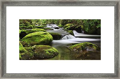 Surrounded In Green Framed Print