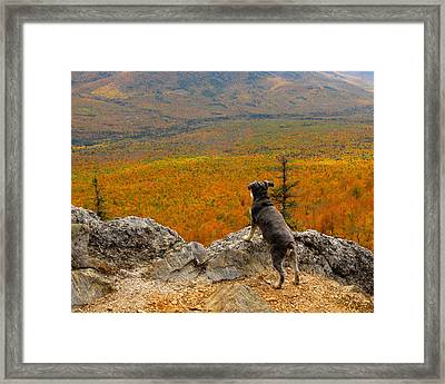 Surveying Autumn Framed Print