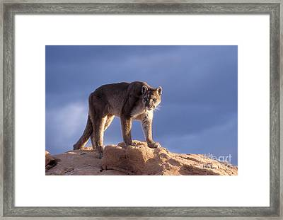 Surveying The Territory Framed Print