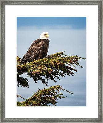 Surveying The Treeline Framed Print