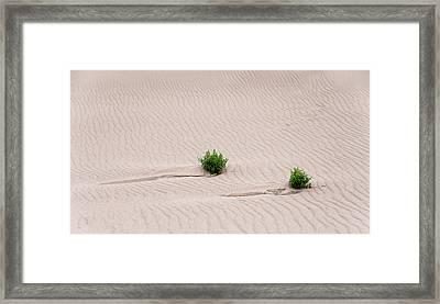 Survival Of Nature Framed Print