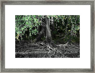 Survival Of The Fittest Framed Print by Debra Forand