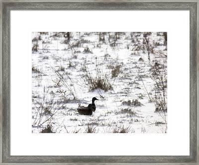 Surviving Winter Framed Print by Wim Lanclus