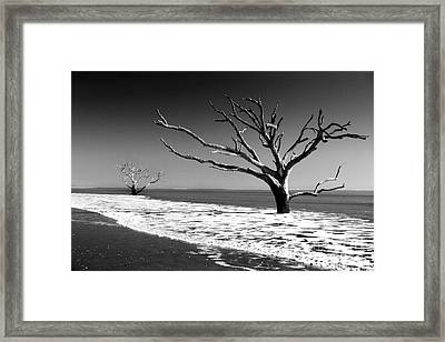 Framed Print featuring the photograph Survivor by Dana DiPasquale