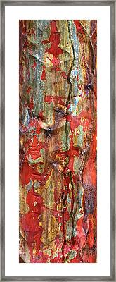 Survivor Framed Print by Marcia Colelli