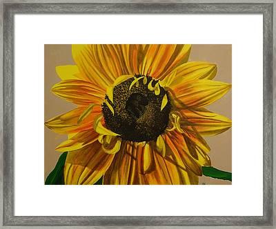 Susanna's Sunflower Framed Print by Amelia Emery