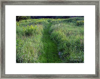 Susan's Meadow Framed Print by Georgia Sheron