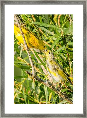 Framed Print featuring the photograph Sushi For The Family by Steven Santamour