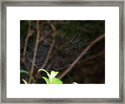 Framed Print featuring the photograph Suspended by Angi Parks