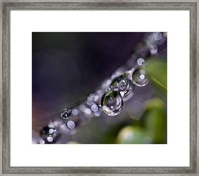 Suspended Jewel Framed Print by Rebecca Cozart