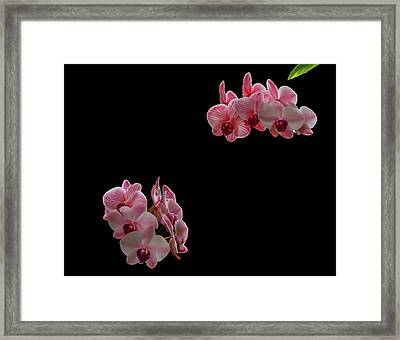 Suspended Orchids Framed Print