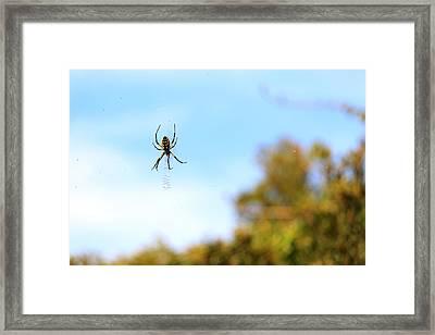 Suspended Spider Framed Print