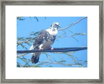 Suspicious Bird Framed Print