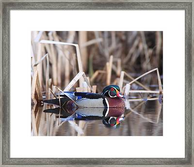 Framed Print featuring the photograph Suspicious by Gerry Sibell