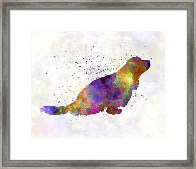 Sussex Spaniel In Watercolor Framed Print by Pablo Romero