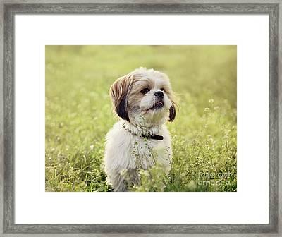 Sute Small Dog Framed Print by Jelena Jovanovic