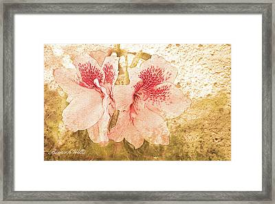 Framed Print featuring the photograph Sutle Harmony by Bonnie Willis