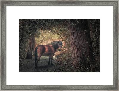 Sutton Pony Framed Print