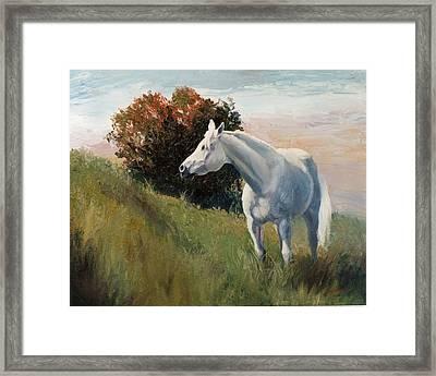 Suzie  Arabian Horse Portrait Painting Framed Print by Kim Corpany