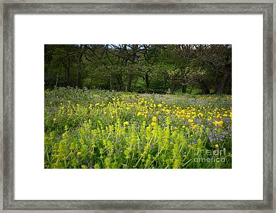 Swaledale Colours Framed Print by Nichola Denny