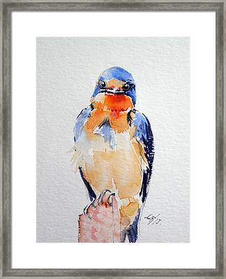 Swallow Framed Print by Kovacs Anna Brigitta