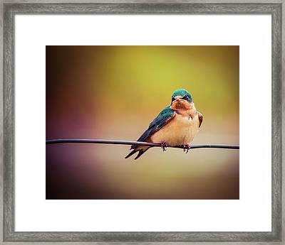 Framed Print featuring the photograph Swallow by Mary Hone