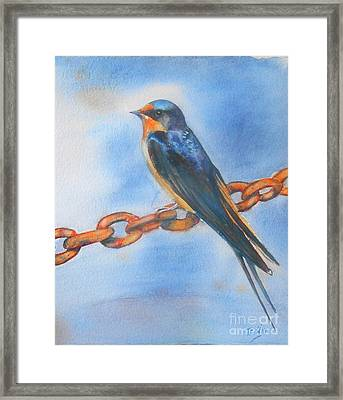Swallow Framed Print by Patricia Pushaw