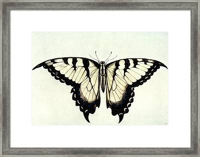 Swallow-tail Butterfly Framed Print by Granger