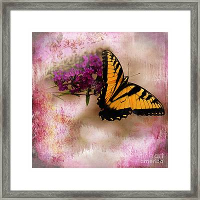 Swallow Tail Full Of Beauty Framed Print