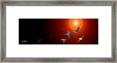 Swallows In Flight Framed Print