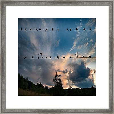 Framed Print featuring the photograph Swallows by Vladimir Kholostykh