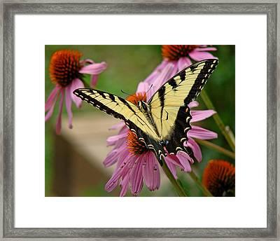 Swallowtail 1 Tn Framed Print
