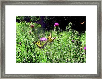 Swallowtail Butterflies And Company Framed Print
