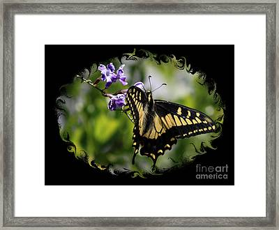 Swallowtail Butterfly 2 With Swirly Framing Framed Print by Carol Groenen