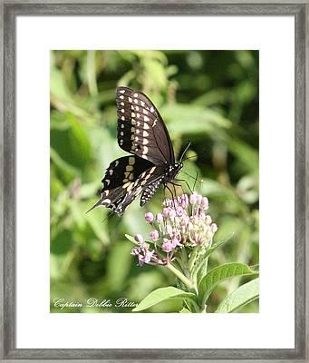 Swallowtail Butterfly 3 Framed Print