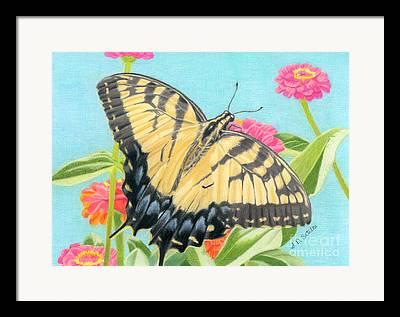 Pollinator Framed Prints