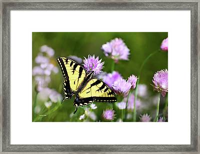 Swallowtail Butterfly Dream Framed Print