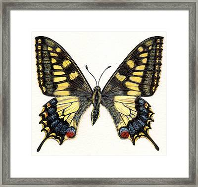 Swallowtail Butterfly Framed Print by Rachel Pedder-Smith