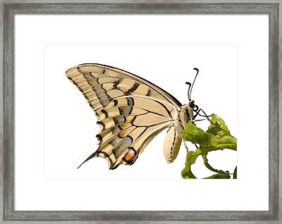 Swallowtail Butterfly Vector Isolated Framed Print by Tracey Harrington-Simpson