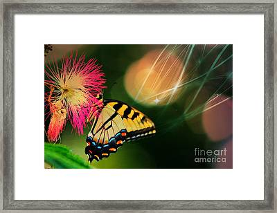 Swallowtail Dreams Framed Print by Karin Everhart