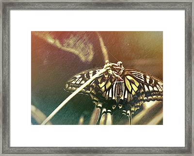 Swallowtail Framed Print by JAMART Photography