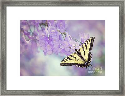 Swallowtail On Purple Flowers Framed Print