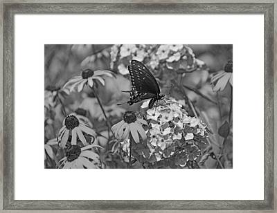 Swallowtail  Framed Print by Sandy Keeton